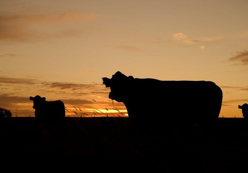 agriculture oda tax